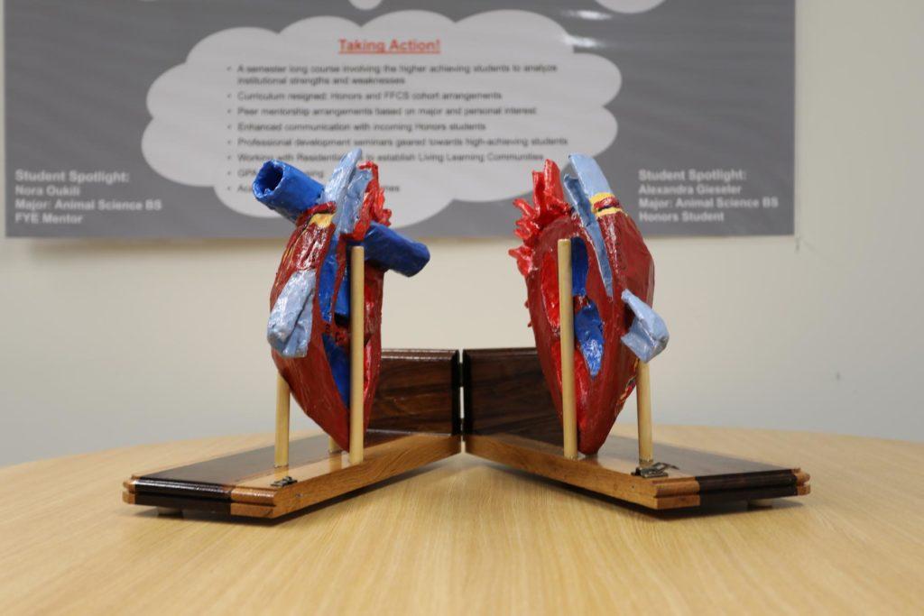 heart model open